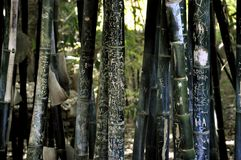 Stand des geschnitzten Bambusses in Jardin Majorelle, Marrakesch Lizenzfreie Stockbilder
