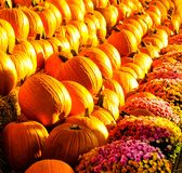Pumpkins galore. A stand filled with pumpkins in autumn Stock Photography