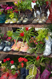 Stand with flowers planted in shoes Royalty Free Stock Photos