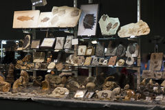 Stand in a fossils exhibition Royalty Free Stock Photos