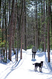 Stand off in the Forest. Man and his best friend stand off against each other on a walk through the woods in winter Stock Images