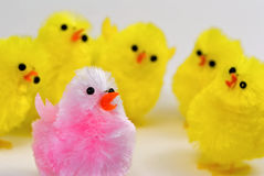 Stand out. A pink fuzzy toy chick stands out amongst a crowd of yellow chicks Stock Images