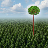 Stand Out From The Crowd. Concept as a forest of evergreen trees with a successful leaf tree standing high above the competition as a business metaphor for Stock Images