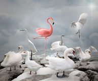 Stand out from a crowd - Flamingo. And white birds Stock Photos