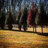 Stand Out. Trees Winter Change Stock Photography