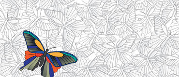 Stand out! Vector banner with many butterflies Stock Image