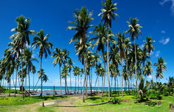 Stand of Palm Trees on the shore of the Caribbean Royalty Free Stock Photos