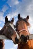 stand tillsammans Royaltyfri Fotografi