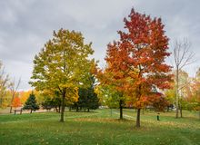 A stand of trees with autumn colors royalty free stock photography