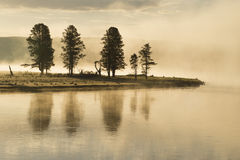 A stand of trees glow in early morning mist. Stock Image
