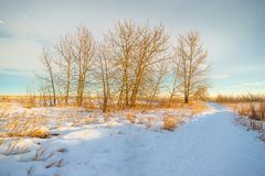 A stand of trees near a snow covered path stock photography