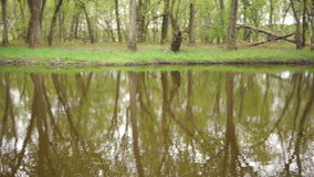 Stand of Trees Secluded Tributary Lower Wisconsin State Riverway Scenic River. Camera pan across a tributary of the Wisconsin River stock footage