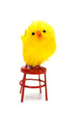Stand up Chick Stock Photos