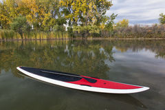 Stand up paddleboard. With paddle on a calm lake in fall scenery royalty free stock image