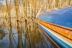 Stand up paddleboard on lake with reeds Royalty Free Stock Photo