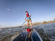 Stand up paddleboard making splashes on lake royalty free stock photos