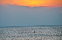 Stand up paddleboarding. Man stand up paddleboarding on the Atlantic Ocean in Virgnia at sunrise Stock Images