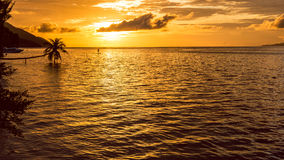 Stand up paddler SUP on Sunset, Kri Island. Raja Ampat, Indonesia, West Papua Stock Photos