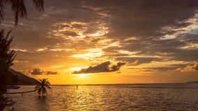 Stand up paddler SUP on Sunset, Kri Island. Raja Ampat, Indonesia, West Papua.  royalty free stock photo