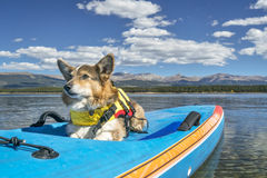 Stand up paddling with a dog stock photos