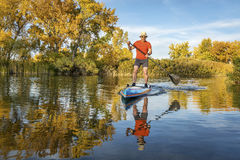 Stand up paddling in fall colors. Senior male paddler enjoys workout on his racing stand up paddleboard in fall colors on lake in Colorado Stock Photo