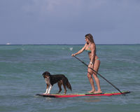 Stand-Up Paddling with pet royalty free stock photos