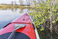 Stand up paddling at springtime Stock Image