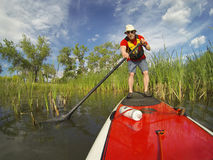 Stand up paddling (SUP) on lake. Senior male paddler enjoying workout on stand up paddleboard (SUP), calm lake in Colorado, spring colors Royalty Free Stock Photography