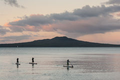 Stand up surfers and Rangitoto Island at sunset Royalty Free Stock Photo