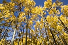Stand von Bäumen Lizenzfreies Stockfoto