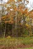Stand von Bäumen mit Herbstlaub Lizenzfreies Stockfoto