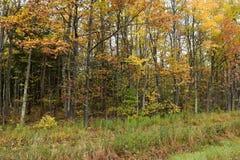 Stand von Bäumen mit Herbstlaub Stockbilder