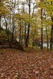 Stand von Bäumen mit Herbstlaub Lizenzfreie Stockfotografie