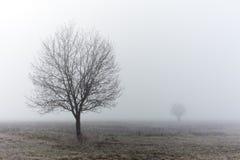 Standalone boom bij dalings nevelige ochtend stock afbeeldingen