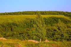 Standalone brzozy na grań krajobrazie obraz stock