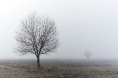 Standalone tree at fall misty morning. Near to city of Kozelsk, Kaluga region Stock Images