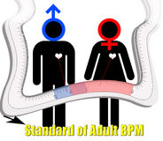 Standard of adult beat per minute Stock Photography