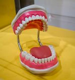 Standard dental model with wide open showing healthy tongue, tee. Th and gum on yellow table Royalty Free Stock Image