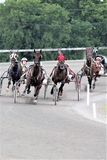 Standardbred racing stock image