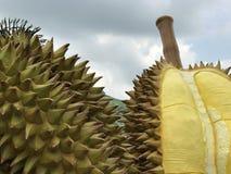 Standbeeld Durians Royalty-vrije Stock Afbeeldingen