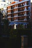 Standbeeld in kleurrijk stedelijk Valencia stock afbeelding