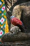Standbeeld van boeddhistisch met de vogel stock foto