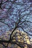 Standbeeld van Christus op kerkkoepel door de de violette bloemen en takken van de jacarandaboom stock afbeeldingen