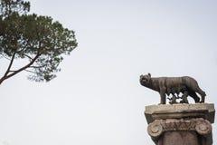 Standbeeld van de historische legende van Romulus en Remus die door de wolf in Rome wordt gevoed stock foto