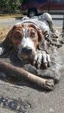 Standbeeld van een hond Royalty-vrije Stock Foto