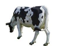 Standbeeld van een koe Dichte omhooggaand van het hoofd van een koe Stock Foto