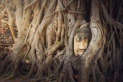 Standbeeld van het hoofd van Boedha in de boomwortels in Wat Maha That Ayutthaya van Thailand wordt verborgen dat , Klooster hist royalty-vrije stock foto's