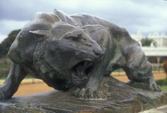 Standbeeld van Luipaard Stock Afbeeldingen