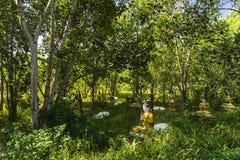 Standbeelden in het bos Stock Fotografie