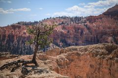 Standing alone in Bryce Canyon Stock Photo